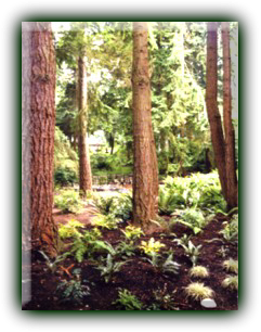 Woodland.png - 40491 Bytes